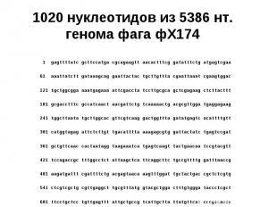 1020 нуклеотидов из 5386 нт. генома фага фХ174