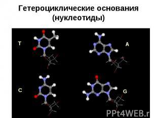 Гетероциклические основания (нуклеотиды)