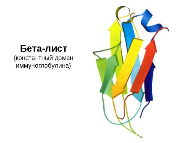 Бета-лист (константный домен иммуноглобулина)