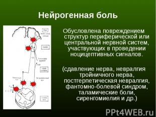 Обусловлена повреждением структур периферической или центральной нервной систем,