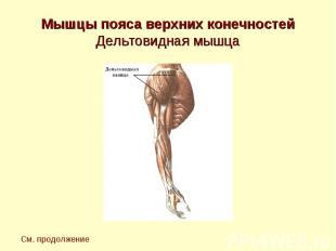 Мышцы пояса верхних конечностей Дельтовидная мышца