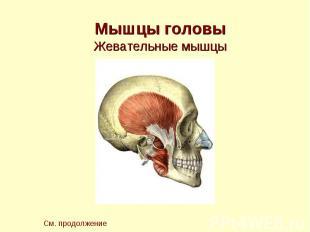 Мышцы головы Жевательные мышцы