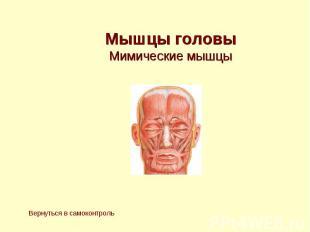 Мышцы головы Мимические мышцы