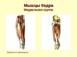Мышцы бедра Медиальная группа