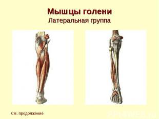 Мышцы голени Латеральная группа