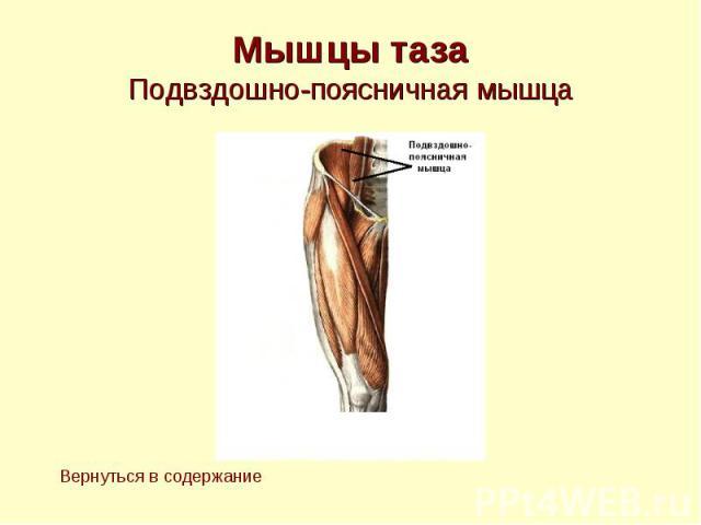 Мышцы таза Подвздошно-поясничная мышца