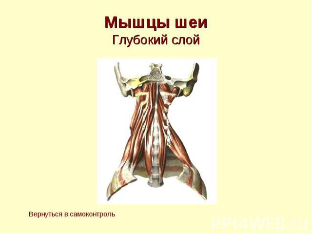 Мышцы шеи Глубокий слой