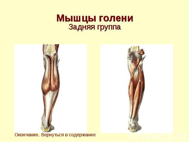 Мышцы голени Задняя группа