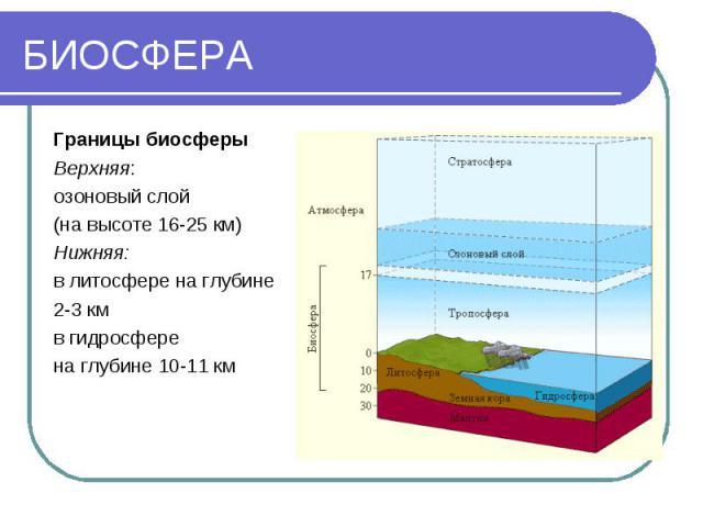 БИОСФЕРА Границы биосферы Верхняя: озоновый слой (на высоте 16-25 км) Нижняя: в литосфере на глубине 2-3 км в гидросфере на глубине 10-11 км