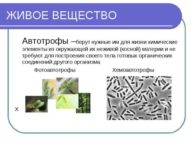 ЖИВОЕ ВЕЩЕСТВО Автотрофы –берут нужные им для жизни химические элементы из окружающей их неживой (косной) материи и не требуют для построения своего тела готовых органических соединений другого организма Фотоавтотрофы Хемоавтотрофы Х