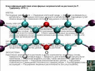 Классификация действия атмосферных загрязнителей на растения (по Р. Гудериану, 1