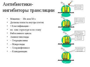 Мишени – 30s или 50 s Мишени – 30s или 50 s Должны попасть внутрь клеток • Класс