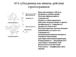 Механизмы действия антибиотиков