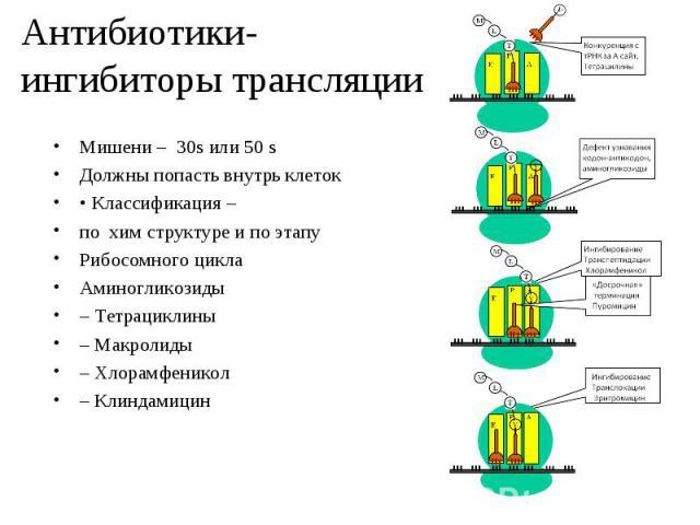 Мишени – 30s или 50 s Мишени – 30s или 50 s Должны попасть внутрь клеток • Классификация – по хим структуре и по этапу Рибосомного цикла Аминогликозиды – Тетрациклины – Макролиды – Хлорамфеникол – Клиндамицин