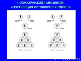 «Классический» механизм: инактивация оставшегося аллеля