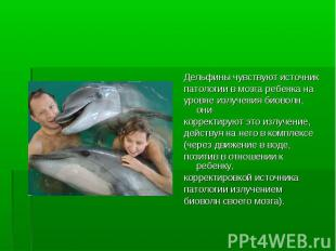 Дельфины чувствуют источник Дельфины чувствуют источник патологии в мозга ребенк
