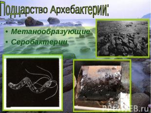 Метанообразующие Метанообразующие Серобактерии