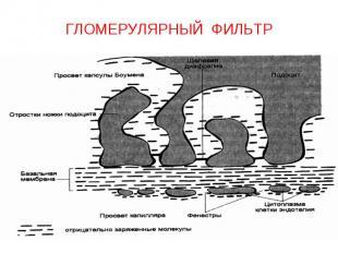 ГЛОМЕРУЛЯРНЫЙ ФИЛЬТР