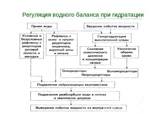 Регуляция водного баланса при гидратации