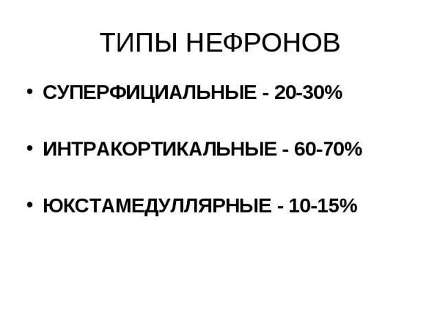 ТИПЫ НЕФРОНОВ СУПЕРФИЦИАЛЬНЫЕ - 20-30% ИНТРАКОРТИКАЛЬНЫЕ - 60-70% ЮКСТАМЕДУЛЛЯРНЫЕ - 10-15%
