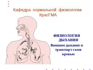 Кафедра нормальной физиологии КрасГМА ФИЗИОЛОГИЯ ДЫХАНИЯ Внешнее дыхание и транс
