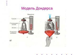 Модель Дондерса