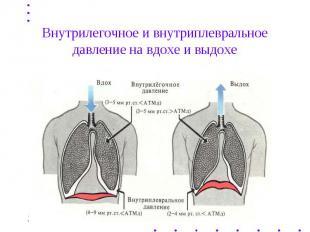 Внутрилегочное и внутриплевральное давление на вдохе и выдохе