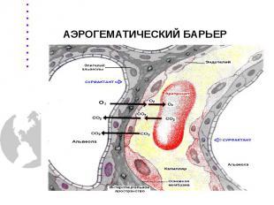 АЭРОГЕМАТИЧЕСКИЙ БАРЬЕР