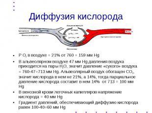 Диффузия кислорода Р О2 в воздухе = 21% от 760 = 159 мм Hg В альвеолярном воздух
