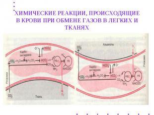 ХИМИЧЕСКИЕ РЕАКЦИИ, ПРОИСХОДЯЩИЕ В КРОВИ ПРИ ОБМЕНЕ ГАЗОВ В ЛЕГКИХ И ТКАНЯХ