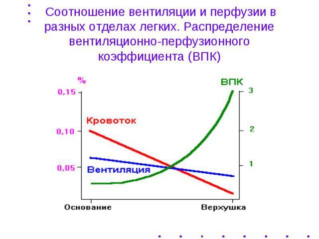 Соотношение вентиляции и перфузии в разных отделах легких. Распределение вентиляционно-перфузионного коэффициента (ВПК)