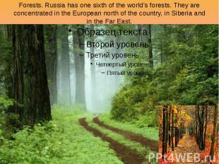 Forests. Russia has one sixth of the world's forests. They are concentrated in t