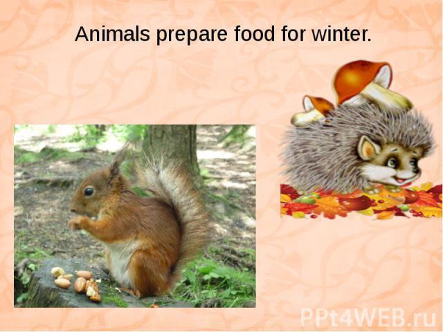 Animals prepare food for winter.