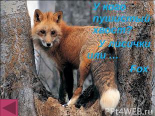 У кого пушистый хвост? У кого пушистый хвост? У лисички или … Fox