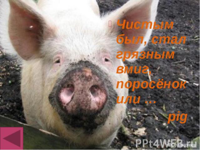 Чистым был, стал грязным вмиг, поросёнок или … Чистым был, стал грязным вмиг, поросёнок или … pig