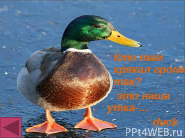 Кто там крякал громко так? Кто там крякал громко так? это наша утка-… duck