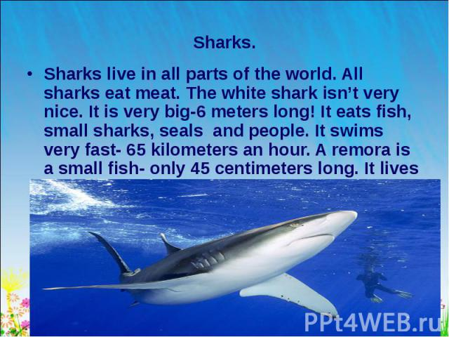 Sharks live in all parts of the world. All sharks eat meat. The white shark isn't very nice. It is very big-6 meters long! It eats fish, small sharks, seals and people. It swims very fast- 65 kilometers an hour. A remora is a small fish- only 45 cen…