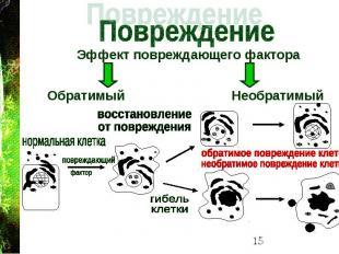 Эффект повреждающего фактора Эффект повреждающего фактора Обратимый Необратимый
