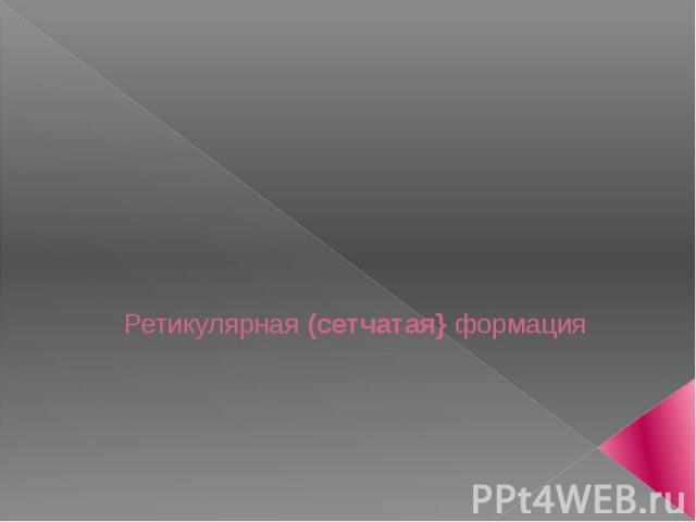 Ретикулярная (сетчатая} формация