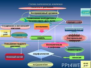 Схема патогенеза коклюша