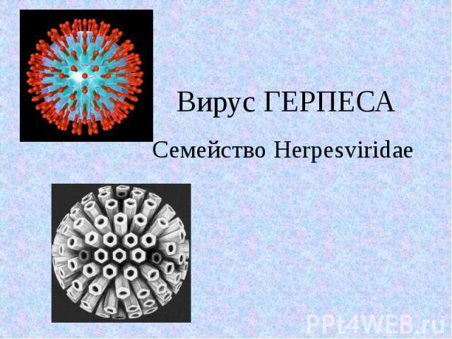 Вирус ГЕРПЕСА Семейство Herpesviridae
