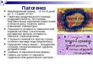 Патогенез Инкубационный период – от 20-25 дней до 3, 7 и даже 10 лет. Симптомы п