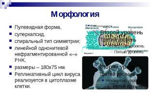 Морфология Пулевидная форма, суперкапсид, спиральный тип симметрии; линейной одн