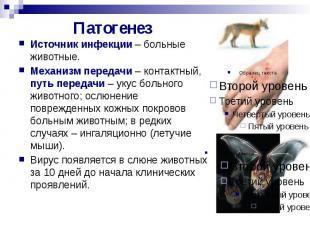 Патогенез Источник инфекции – больные животные. Механизм передачи – контактный,