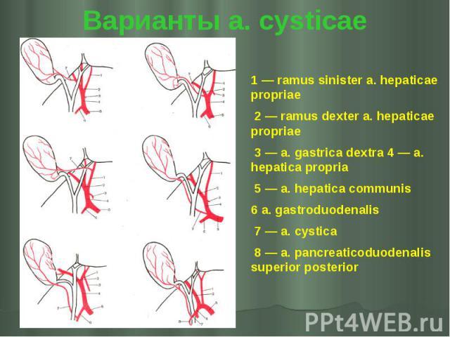 Варианты a. cysticae