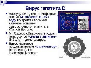 Вирус гепатита D Возбудитель дельта инфекции открыт M. Rizzetto в 1977 году во в