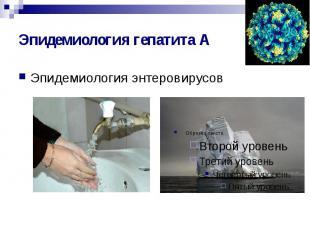 Эпидемиология гепатита А Эпидемиология энтеровирусов