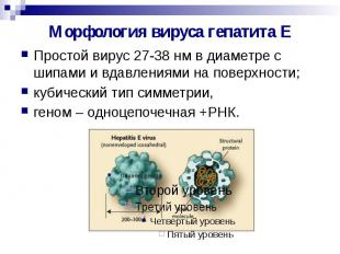 Морфология вируса гепатита Е Простой вирус 27-38 нм в диаметре с шипами и вдавле