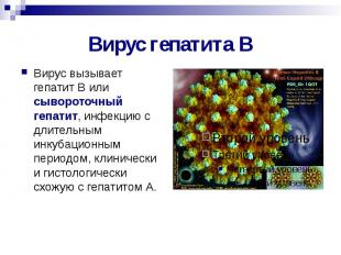 Вирус гепатита В Вирус вызывает гепатит В или сывороточный гепатит, инфекцию с д