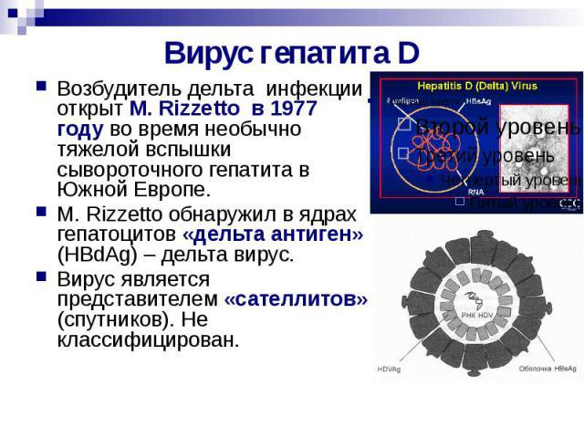 Вирус гепатита D Возбудитель дельта инфекции открыт M. Rizzetto в 1977 году во время необычно тяжелой вспышки сывороточного гепатита в Южной Европе. M. Rizzetto обнаружил в ядрах гепатоцитов «дельта антиген» (HBdAg) – дельта вирус. Вирус является пр…